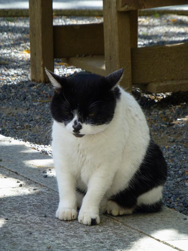 ベンチの前の白黒猫4