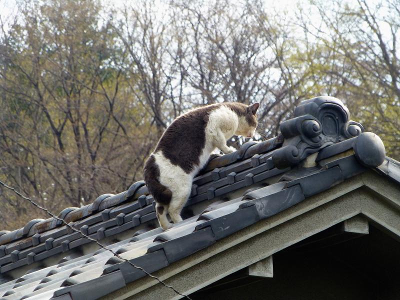 屋根の上の2匹の猫1