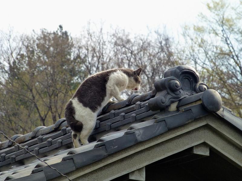 屋根の上の2匹の猫2