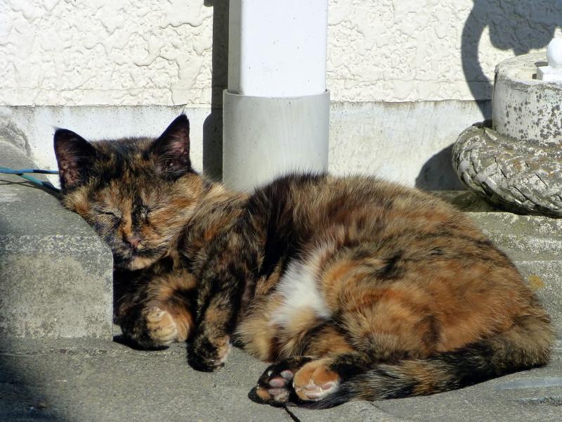 白壁とサビ柄猫2匹2