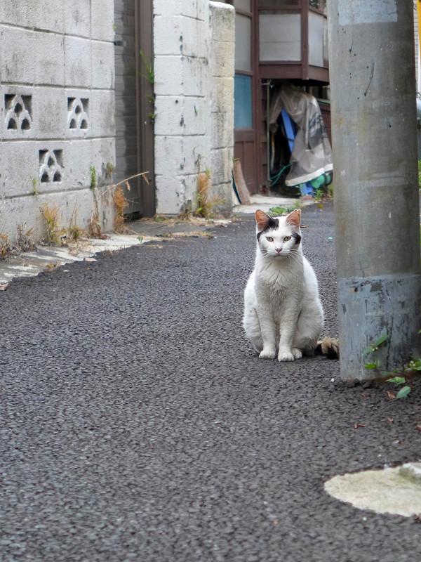 路地から見ている白黒猫1