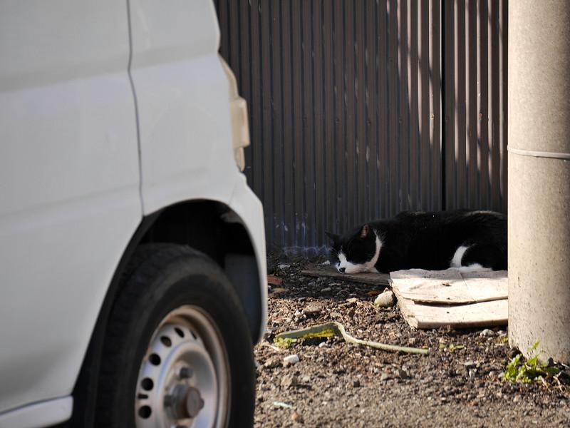 車の下のキジ白猫と茶トラ猫3