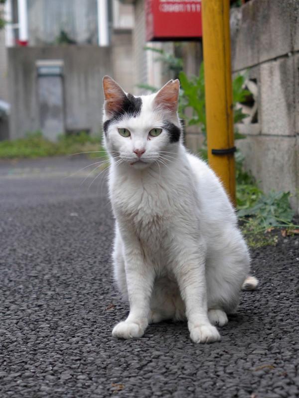 路地から見ている白黒猫2