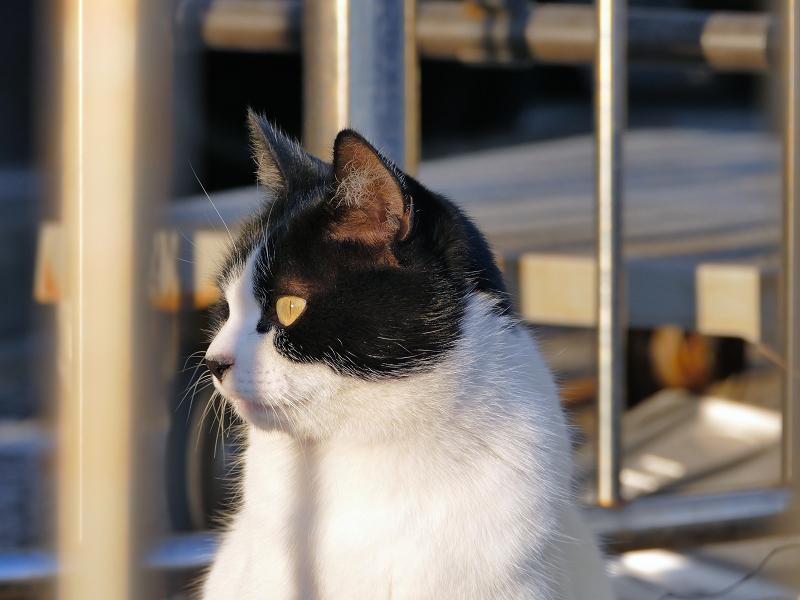 柵と白黒猫2