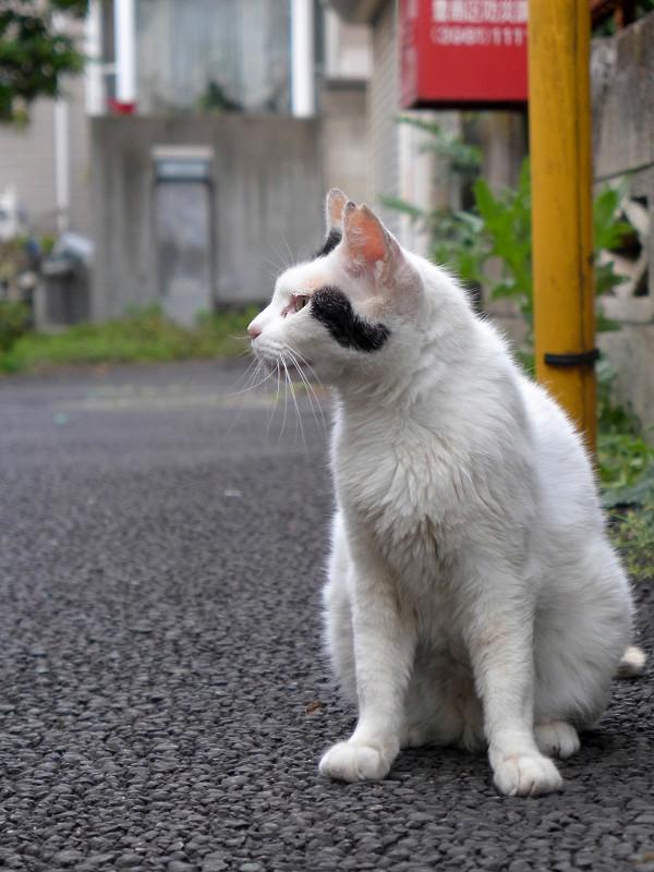 路地から見ている白黒猫3