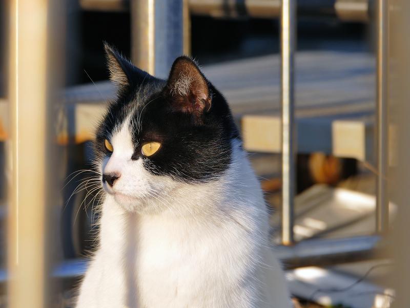 柵と白黒猫3