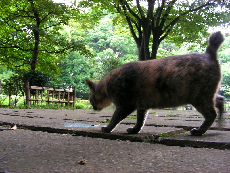 岩から降りたサビ柄猫1