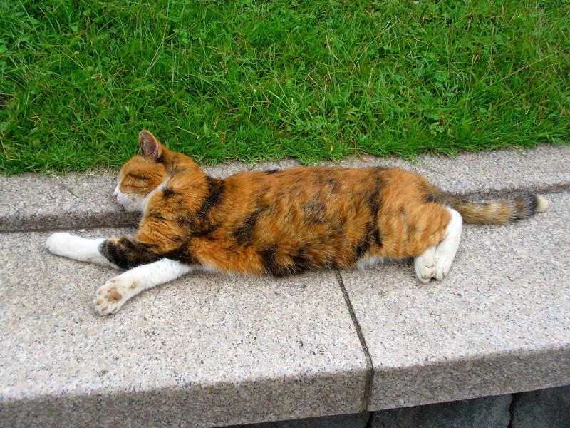 ベンチで寝ている三毛猫1