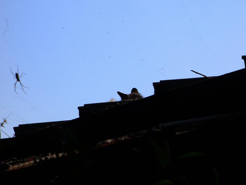 屋根上にいた猫