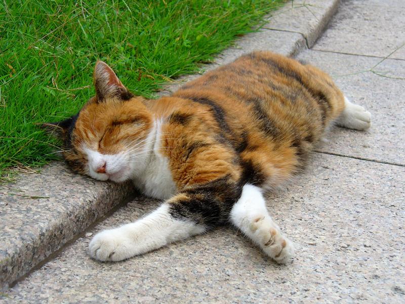 ベンチで寝ている三毛猫2