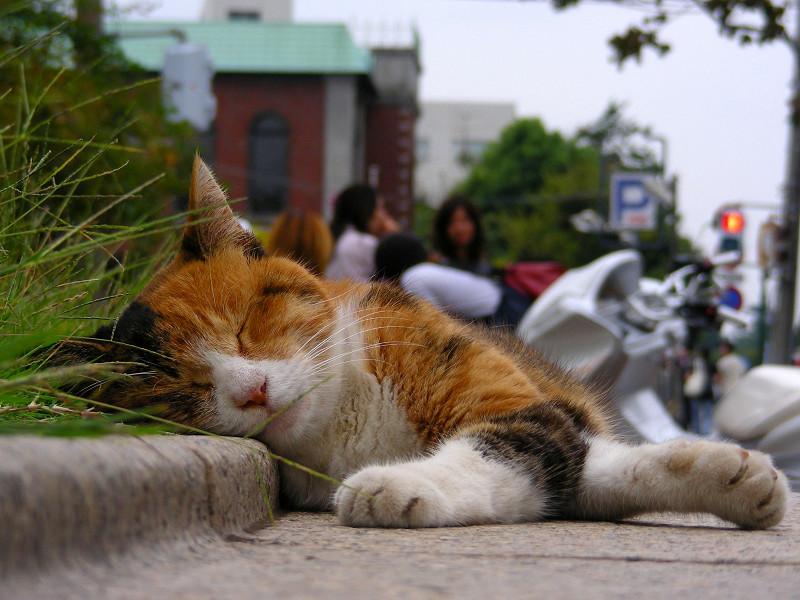 ベンチで寝ている三毛猫3