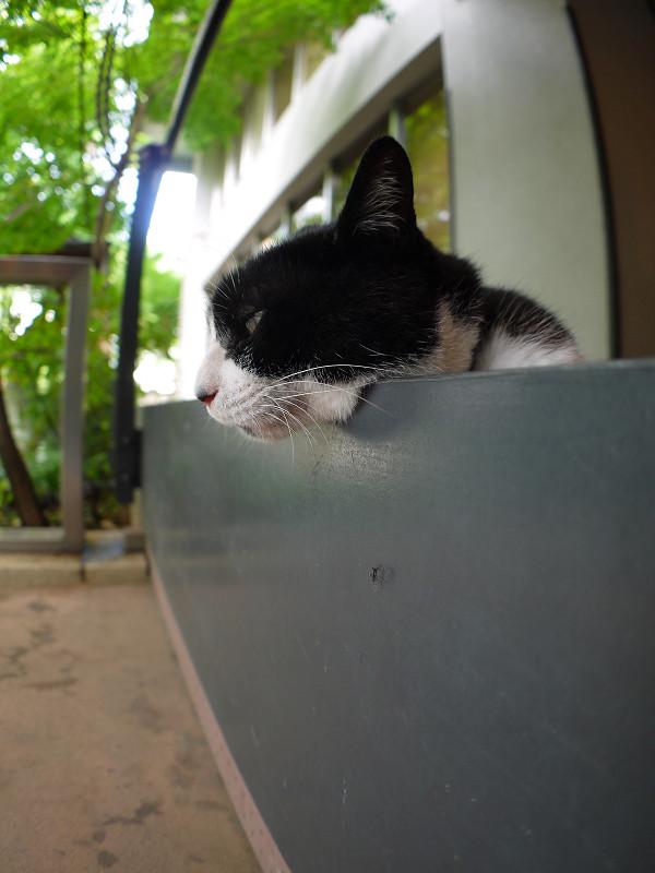 スロープの壁に顎を乗せてる黒白猫1