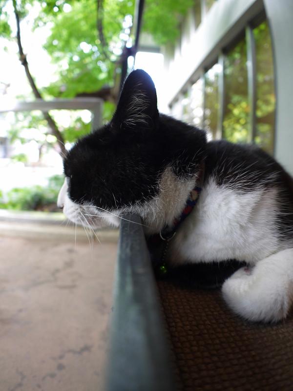 スロープの壁に顎を乗せてる黒白猫2