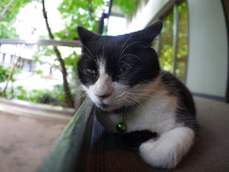 スロープの壁に顎を乗せてる黒白猫3