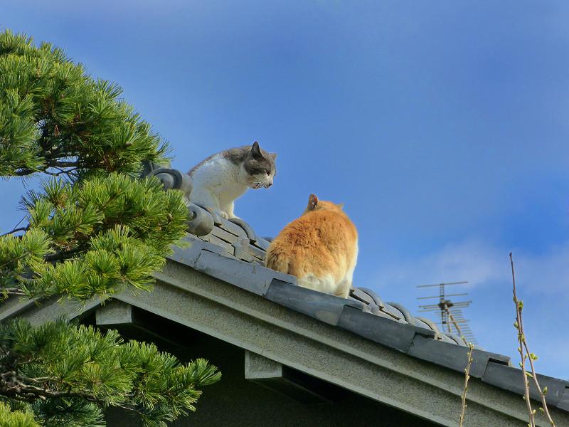 青空下屋根の上の猫たち1