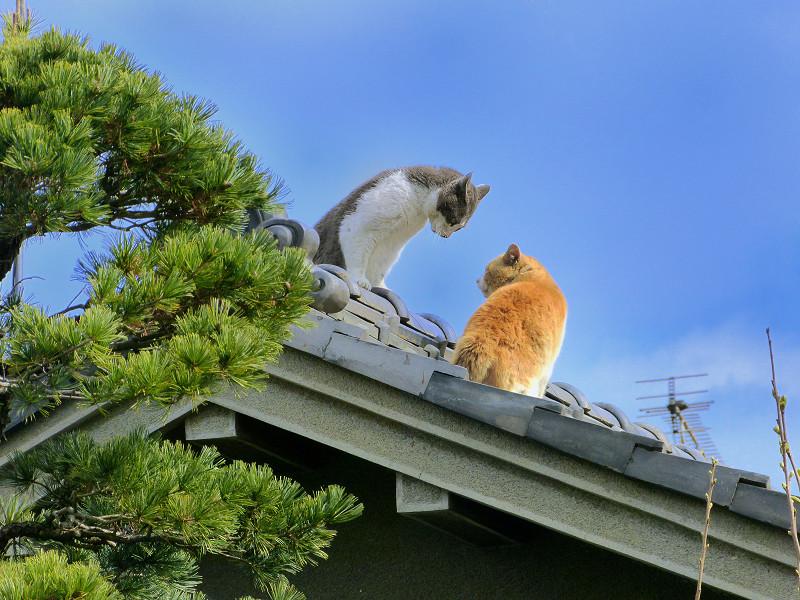 青空下屋根の上の猫たち2