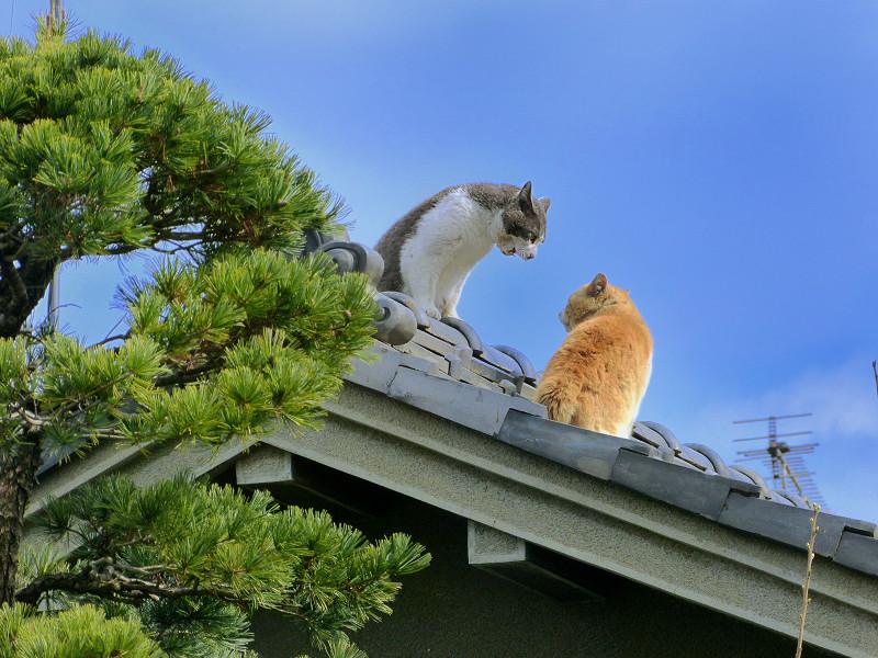 青空下屋根の上の猫たち3
