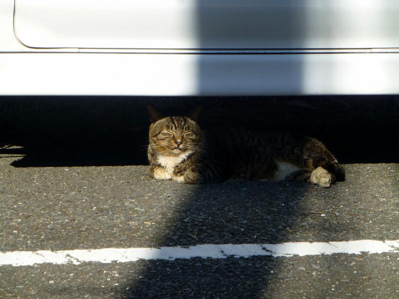 車とキジ白猫と影