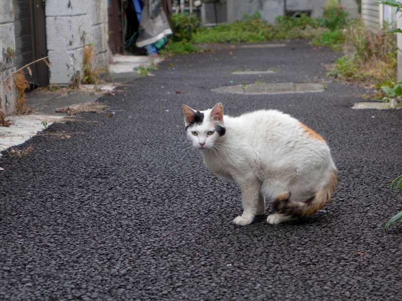 ブロック塀を見上げている白黒猫1