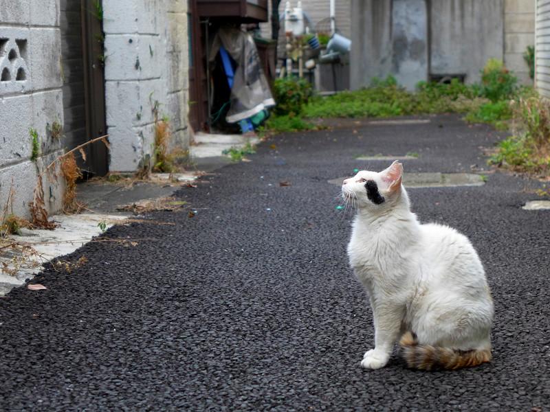 ブロック塀を見上げている白黒猫2