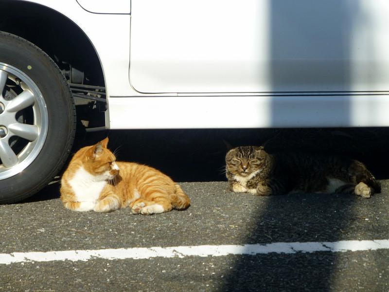 車と猫と影