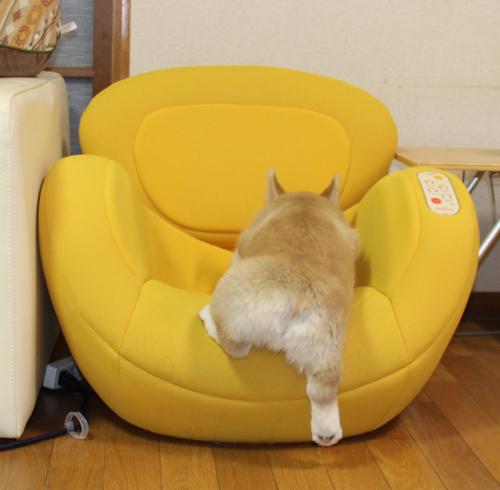 椅子によっこらしょ