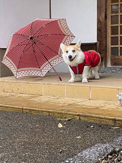 傘のとなり