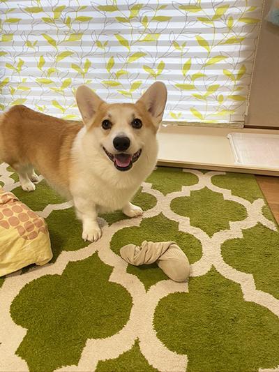 靴下おもちゃ