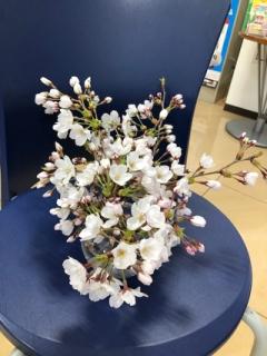 桜_2020_02