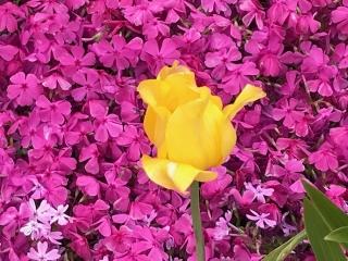 春が来た_02
