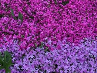 春が来た_05