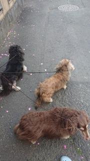 犬の散歩_01