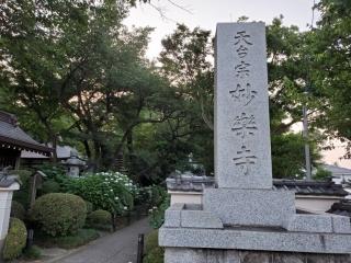 妙楽寺の紫陽花09