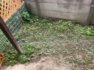 草刈りパート203