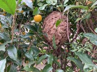 蜂の巣_001
