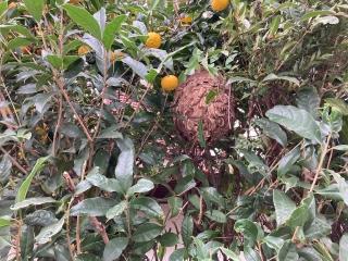 蜂の巣_000