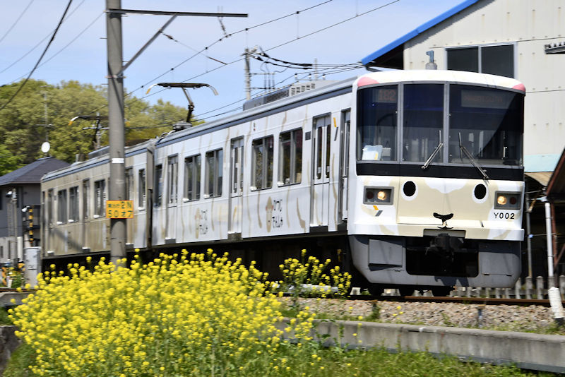 5839_ひつじ電車2