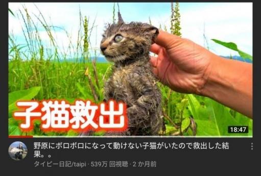 """【速報】ネズミ捕りの粘着剤まみれで保護した 猫の""""でんちゃん""""が死んだばかりのYoutuberさん 新しい """"子猫"""" を保護すると発表!!"""