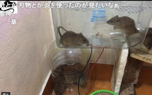【悲報】ニコニコ動画、動物虐待で埋まる・・・日本人さぁ・・・