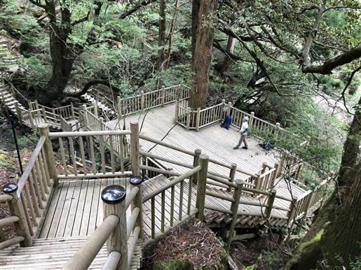 4月15日 縄文杉展望デッキ