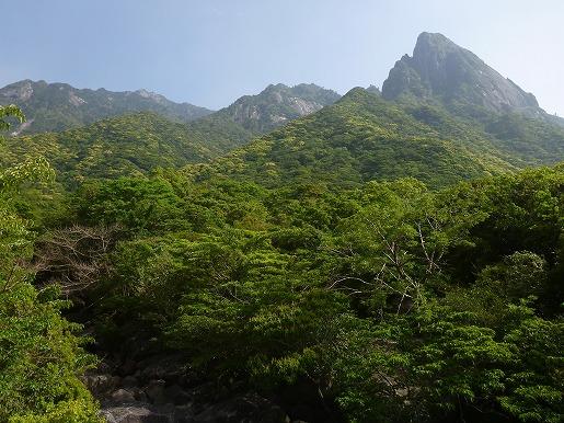 新緑とモッチョム岳