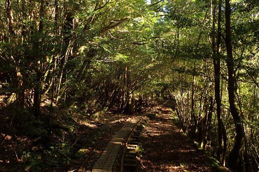 11月25日 常緑の森