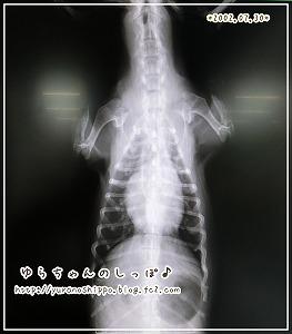 術後レントゲン検査3