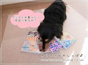 DOG SIGNAL2