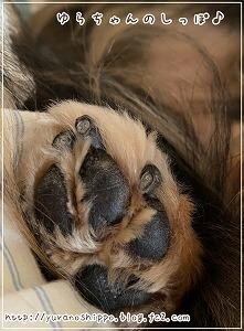 爪の断面図1