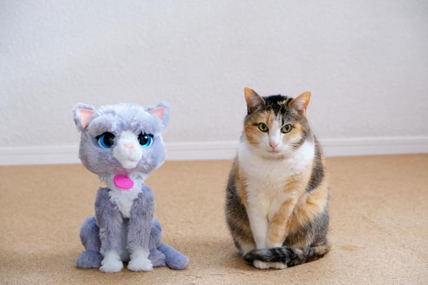 2020年4月・愛猫・リアルファーブーツィー①