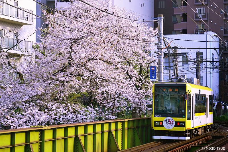 絶景探しの旅 - 絶景写真 No.1277 面影橋に向かう東京さくらトラム (東京都 豊島区)