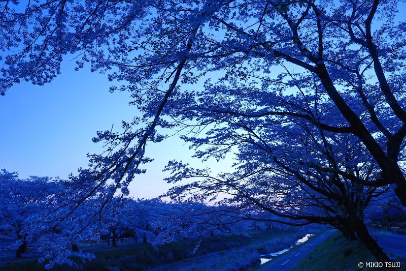 絶景探しの旅 - 絶景写真 No.1278 青い夜明け・南浅川の桜並木 (東京都 八王子市)