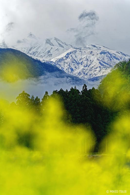 絶景探しの旅 - 絶景写真No.1334 菜種梅雨 (白山/石川県 白山市)
