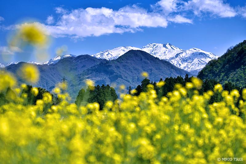 絶景探しの旅 - 絶景写真No.1335 菜の花と白山の見える風景 (石川県 白山市)